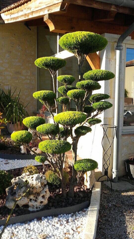 cr ation niwaki arbre en nuage chez le particulier jeunes niwaki en conteneurs. Black Bedroom Furniture Sets. Home Design Ideas