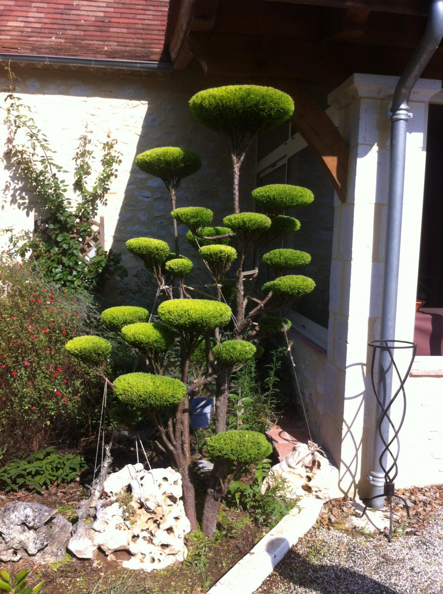Cr ation niwaki arbre en nuage chez le particulier for Entretien des jardins chez les particuliers