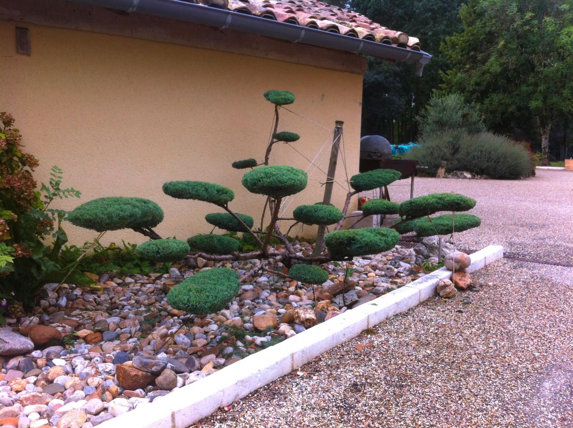 Cr ation niwaki arbre en nuage chez le particulier for Entretien jardinage chez particulier